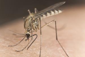 Просто люди смогли осознать, что лучше... электронный отпугиватель комаров.  После того, как в интернете появилась...