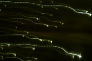 Спермы хоть отбавляй #8